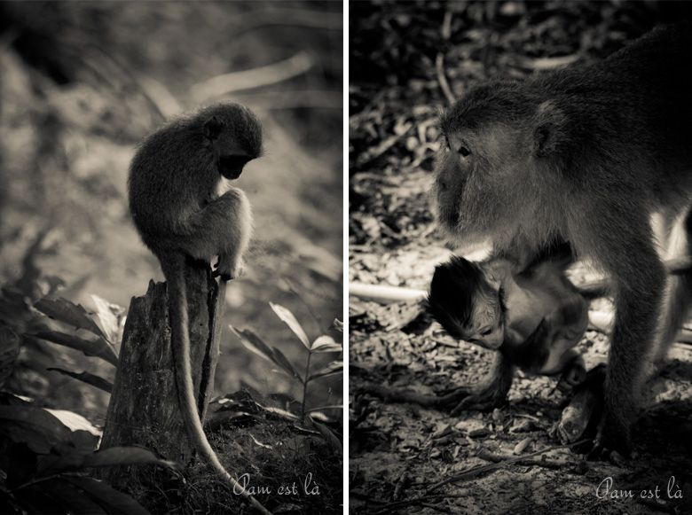Album - thailande-railay-singes