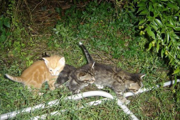 Tous les chats de mon jardin...