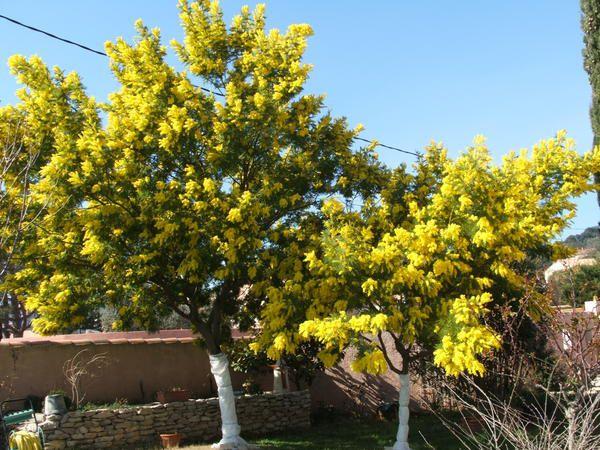 <p>Les fleurs de mon jardin</p>