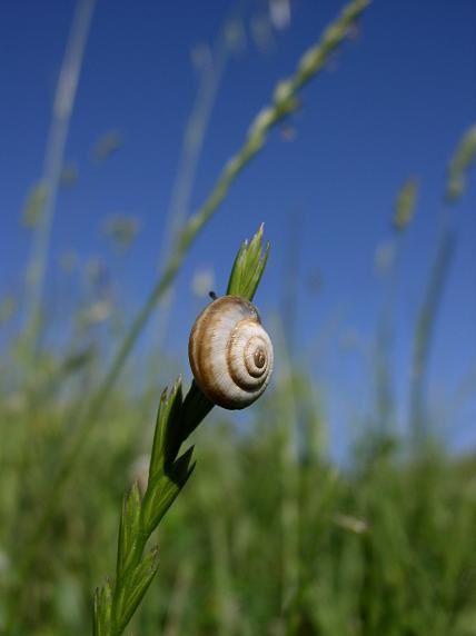 La nature nous offre de jolis spectacles. En voici quelques uns qui ont attiré mon regard.