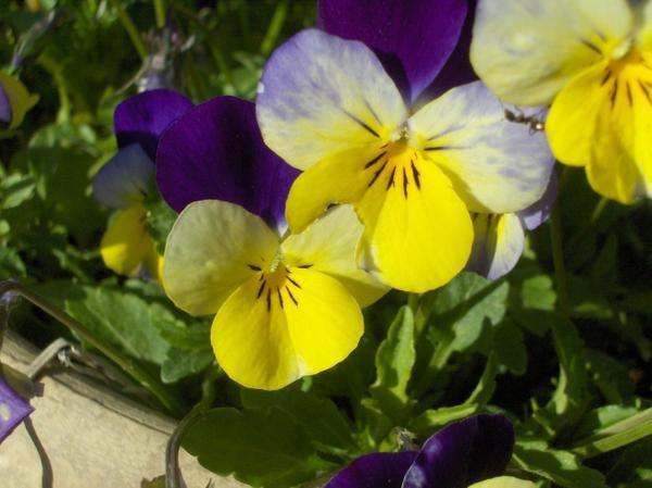Photos de fleurs, plantes, animaux.