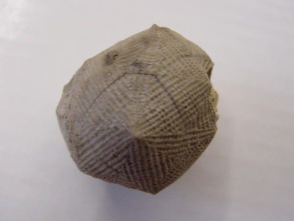 """<p>Les échinodermes moins connus (carpoïdes, cystoïdes, blastoïdes, astérides) sont rassemblés ici.</p><p>Les vestiges retrouvés sont les calices et assez régulièrement des squelettes complets en association.</p><p>Phil """"Fossil"""""""