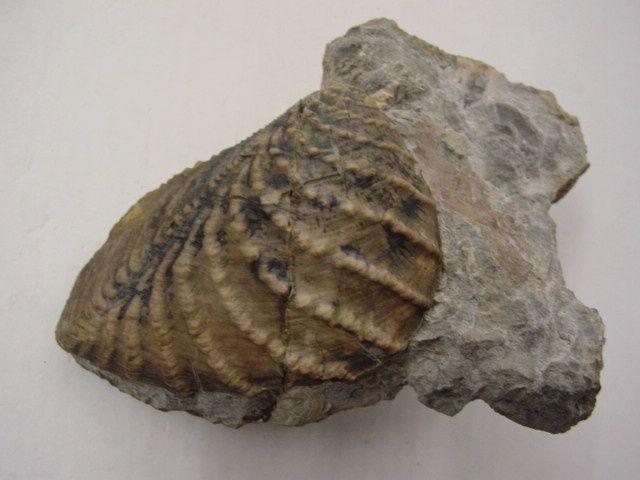 <p>Album de la faune fossile d'Allemagne</p><p>Cet album contient les fossiles originaires d'Allemagne, hormis ceux de l'Eifel.</p><p>Toutes ces pièces appartiennent à notre collection privée.</p><p>Phil « Fossil »</p