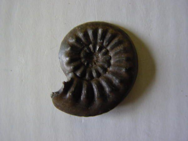 <p>Cet album reprend une série de fossiles provenant d'Alsace et de Lorraine, originaires de ma collection personnelle.</p><p>Ils datent du Trias, Jurassique et Lutétien.</p><p>Excellente visite !</p><p>Phil « Fossil »</p>