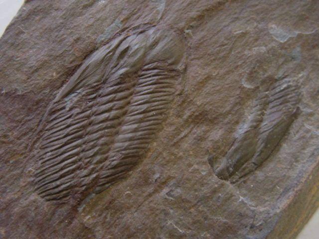 <p>Album photo de la faune anglaise</p><p>Il contient les principaux fossiles encore découvrables de nos jours.</p><p>Toutes ces pièces appartiennent à notre collection.</p><p>Excellente visite !</p><p>Phil « Fossil »</p>