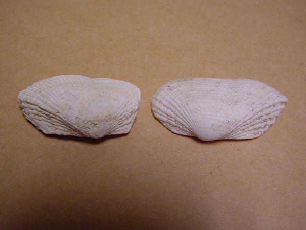 <p>Des trilobites ordoviciens aux requins miocènes, voici l'essentiel des fossiles de l'Anjou, de la Touraine et du Poitou.</p><p>Tous appartiennent à ma collection privée.</p><p>Bonne visite !</p><p>Phil « Fossil »</p>