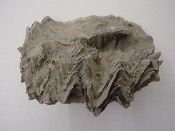 <p>Paradis des paléontologues, la Bretagne et la Normandie offrent de très nombreux fossiles, datés du Cambrien au Pliocène.</p><p>Les systèmes les mieux représentés sont l'Ordovicien, le Jurassique et le Crétacé.</p>