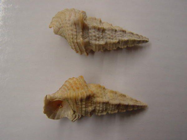 """<p>Cette région est bénie des dieux pour ses nombreux fossiles bien conservés.</p><p>Les étages stratigraphiques rencontrés vont du Cambrien à l'Oligocène.</p><p>Les fossiles les plus marquants ou les plus esthétiques sont repris ici.</p><p>Bonne visite !</p><p>Phil """"Fossil""""</p>"""
