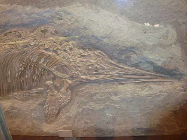 <p>IRScNB : la nouvelle Galerie de l'Evolution.</p><p>Quelques photographies marquantes de notre visite en avant-première.</p><p>Excellente visite !</p><p>Phil « Fossil »</p>