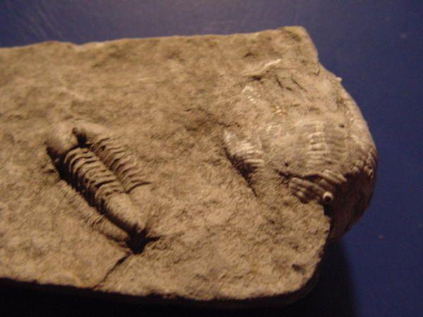 <p>Voici enfin rassemblées vos découvertes, fruit de fouilles harassantes, par tous les temps !</p><p>Les pièces ici présentées appartiennent à mes amis proches, et ont été fréquemment découvertes lors de sorties communes.</p><p>Vous aussi pouvez nous envoyer les photos de vos meilleures trouvailles et quelques explications à des fins de parution. Merci !</p><p>Phil « Fossil »</p>