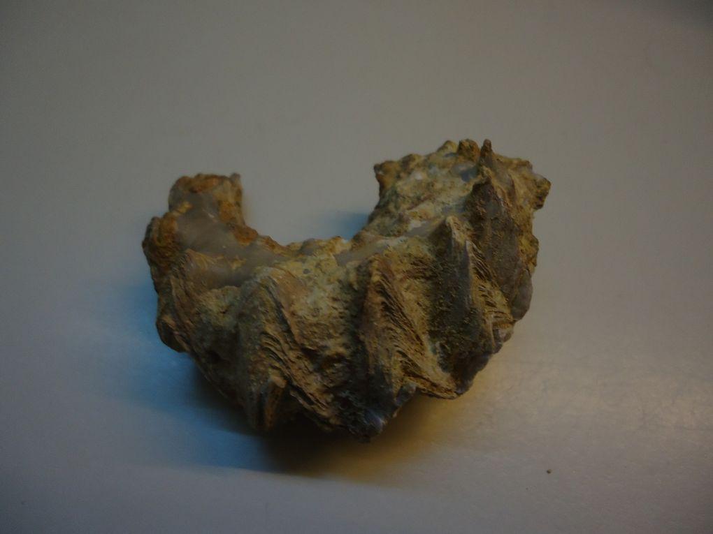 """<p></p><p>Les bivalves sont un peu les """"mal aimés"""" de la Paléontologie, néanmoins certains amateurs se sont spécialisés dans ce groupe d'organismes qui recèle, il est vrai, des spécimens à l'esthétique irréprochable...</p><p>A vous de juger !</p><p>Comme à l'accoutumée toutes ces pièces appartiennent à ma collection.</p><p>Phil """"Fossil""""</p><p></p>"""