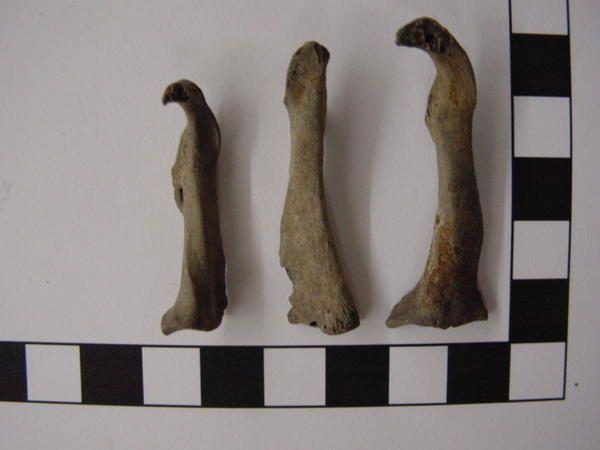 """<p></p><p>Animaux difficilement fossilisable par excellence, leurs os creux fragiles et leurs plumes ne sont pas idéales pour la conservation sous forme fossile !</p><p>Néanmoins quelques vestiges sont connus, extraits de ma collection personnelle, je suis heureux de vous les présenter ici.</p><p>Phil """"Fossil""""</p><p></p>"""