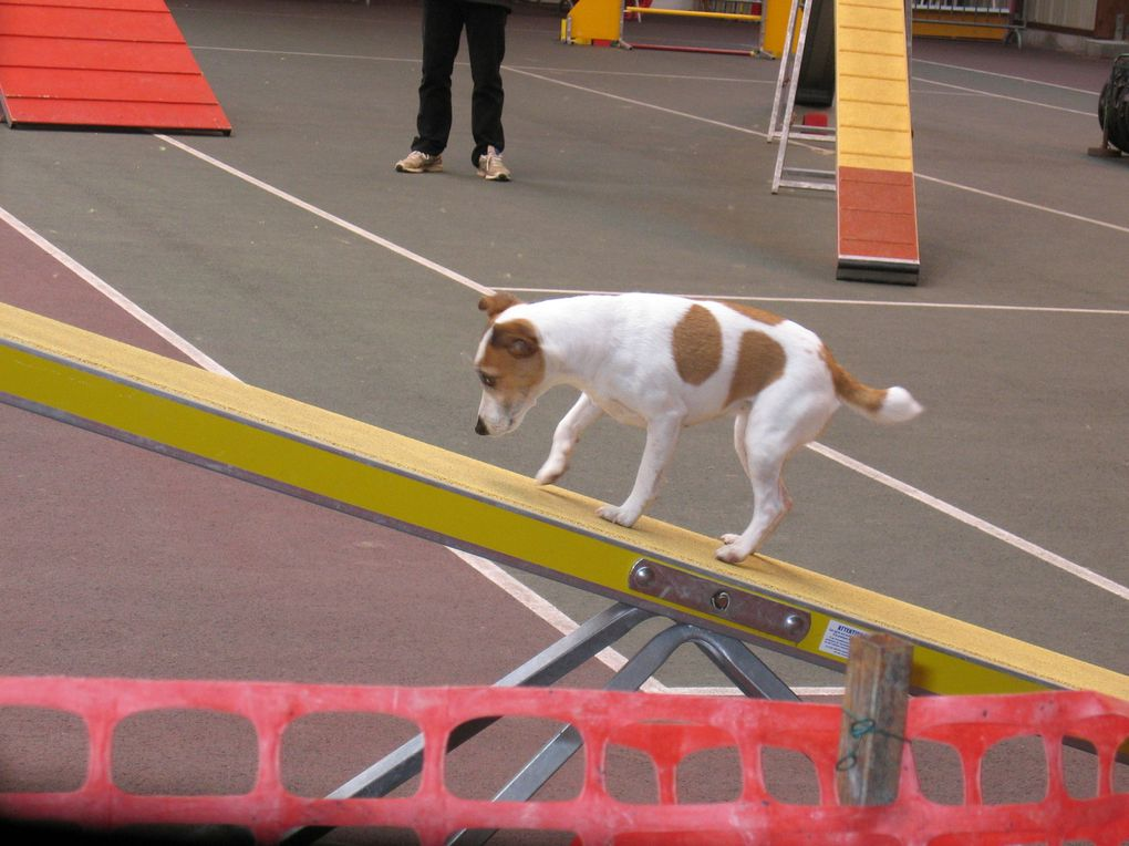 Quelques photos d'agility.