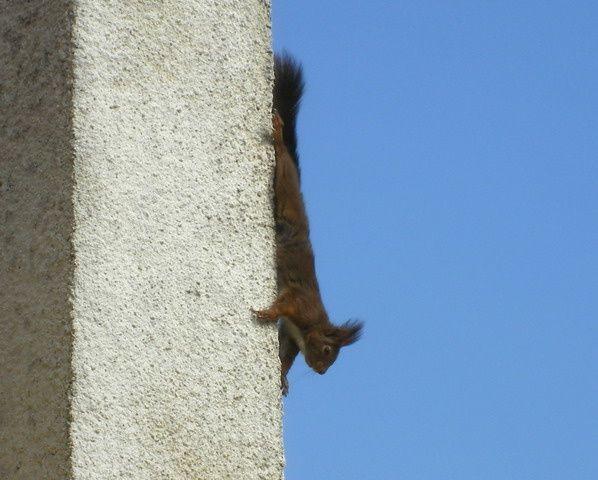 <strong><em>Le petit écureuil prend des risques.......</em></strong>