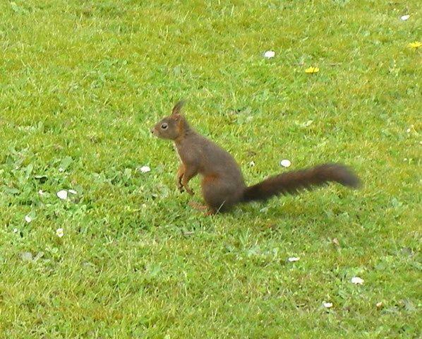 <strong><em>Un beau jour un petit écureuil vint à passer.......</em></strong>