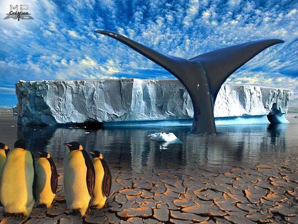 Le but ces photomontages, c'est de les faire parler,de faire passer un message...Ecologique,pour sauver la planète.