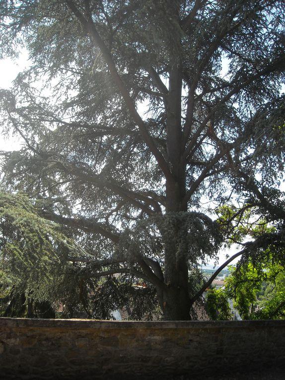 Album - Chateau-Thierry