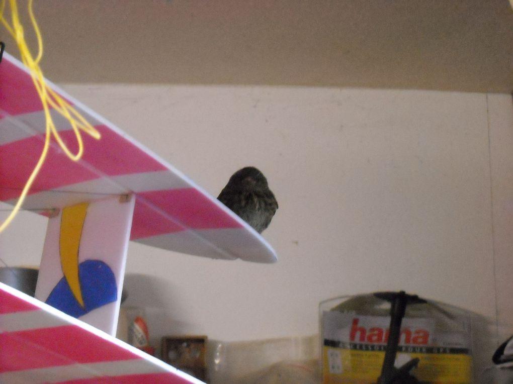 Construction du motoplaneur en mousse produit par Graupner.Concurrent du fameux Easy Glider?