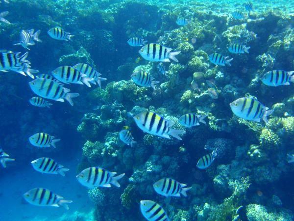 photos fonds marins prises avec appareil photo numérique OLYMPUS 1030sw
