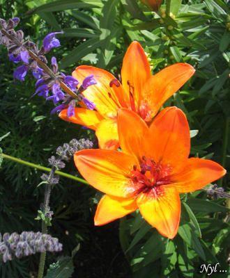 Des b&ecirc&#x3B;tes et des fleurs qui posent pour le plaisir des yeux