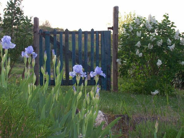 Album - fleurs en  mai
