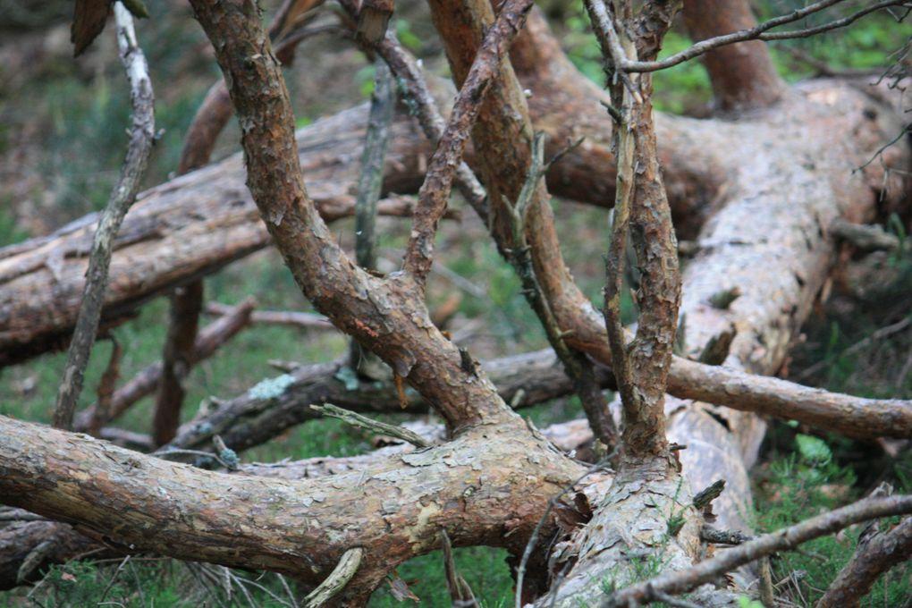 Fontainebleau rochers de BarbizonPhotos: Emmanuel et Mariela 2011M. et Em. presse