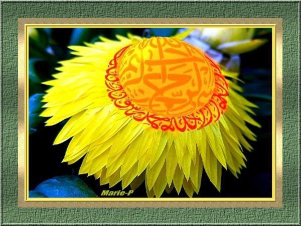 Album - Galerie Muslim