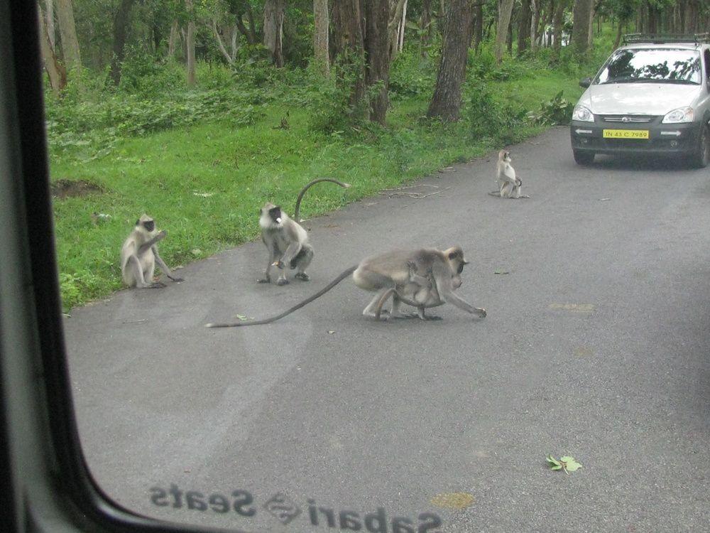 Voyage en Inde du Sud: Karnataka, Tamil Nadu, Kerala