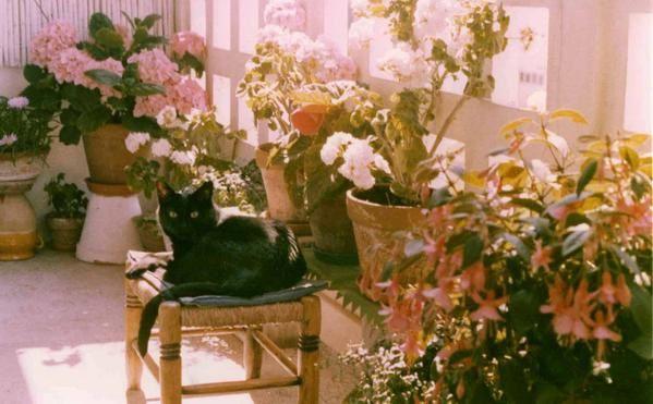 Les chats de la maison, ceux d'autres maisons : famille ou amis, ceux rencontrés dans la rue ici ou en voyage.