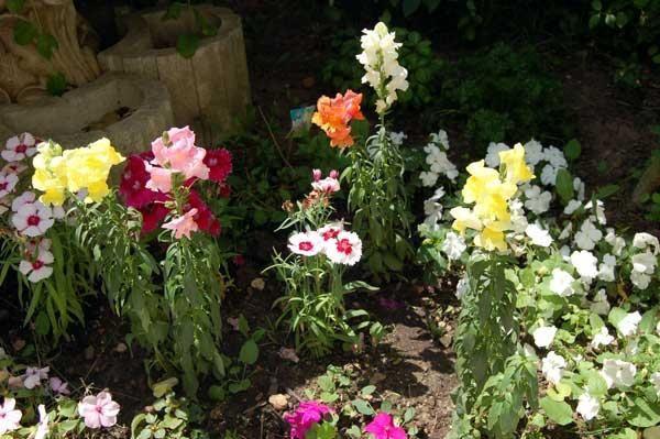 <p>Celles et ceux qui me connaissent savent que j'aime les roses...les oeuillets...et, en gros, tout ce qui pousse (ou que je fais pousser) dans mon jardin. Un petit aper&ccedil&#x3B;u en quelques clics, pris par un bel apr&egrave&#x3B;s midi de Juin :-)</p><p>&nbsp&#x3B;</p>