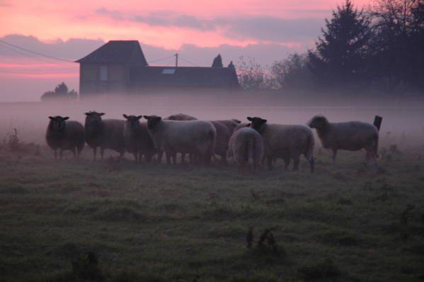 Des poules, des moutons, des oies vagabondent entre la mare, le tilleul centenaire et les champs...