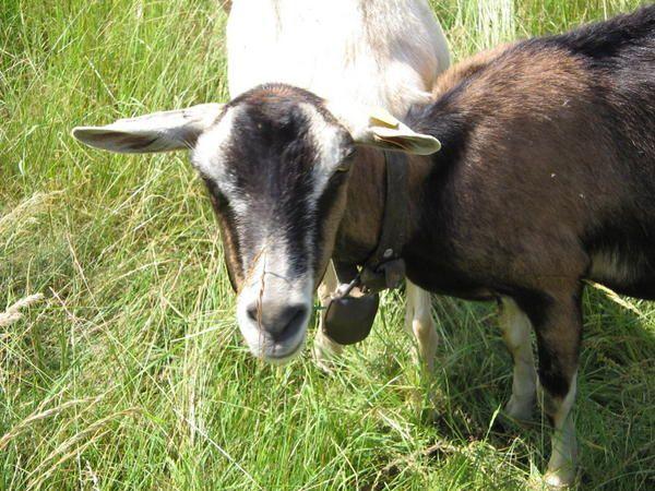 Petit clin d'oeil aux animaux de la ferme, plus nombreux que les habitants de notre d&eacute&#x3B;partement.
