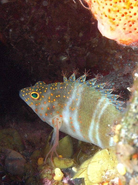 Plongées à Saba - mai 2010