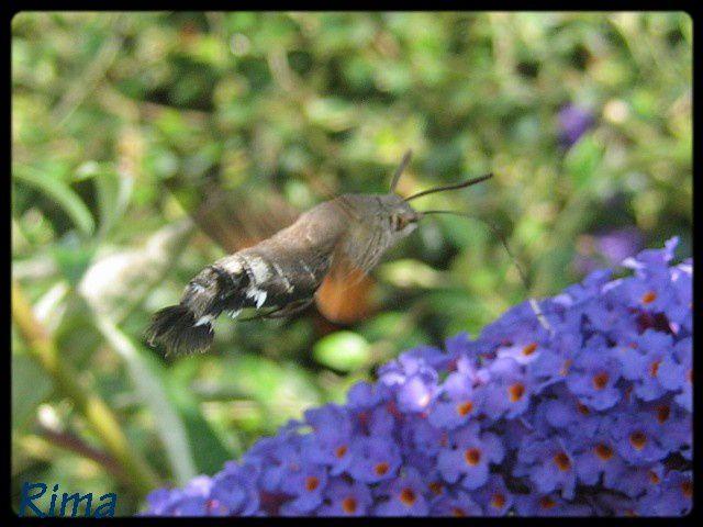 Chateaux ,fleurs ,papillons ,ciels ,