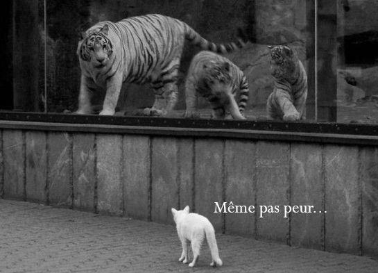 Album - La-vie-privee-des-animaux