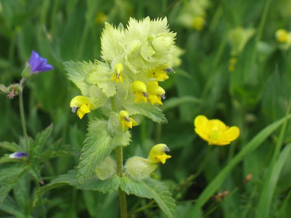 fleurs photographiées par tonton daniel dans la vallée de la  maurienne en juillet 2008