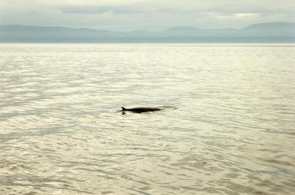 mon voyage au canada en septembre 1994
