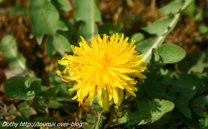 Quoi de plus naturel qu'une fleur...