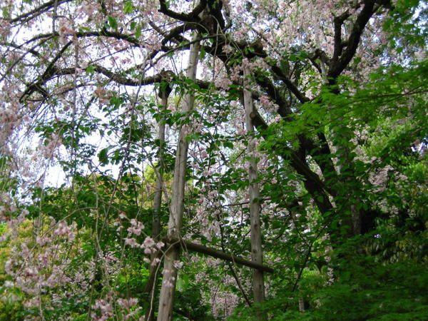 Au gré d'une excursion à Kyoto fin avril 2007 puis en 2009.