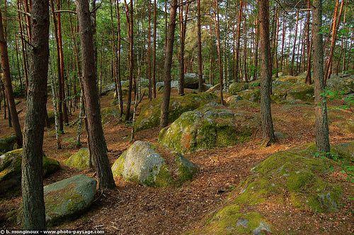 La forêt de Fontainebleau, autrefois appelée forêt de Bière est un important massif boisé de 25 000 ha, dont 21 600 ha sont aujourd'hui administrés en forêt domaniale.Ce massif, au centre duquel se trouve la ville de Fontainebleau, est situ