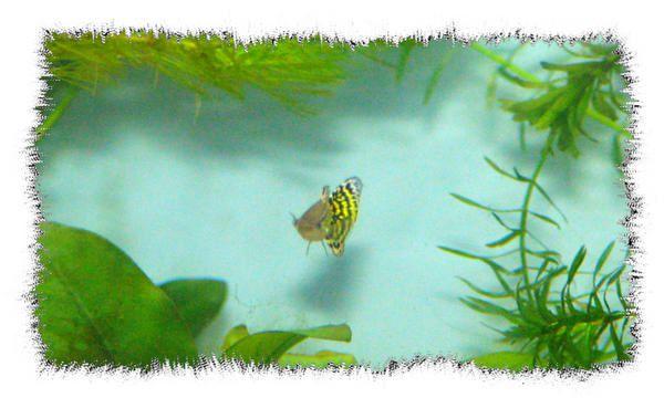 Photos de mes 2 aquarium d'eau douce...