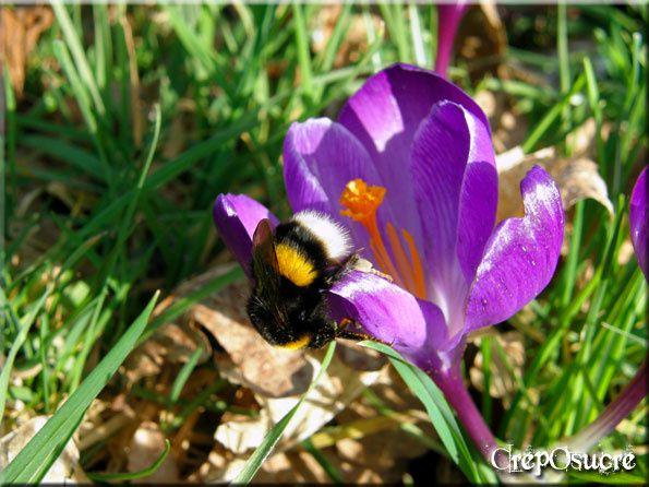 Au jardin d'agréments ou au potager, il y a toujours quelque chose à voir, à semer, à nettoyer et à récolter...