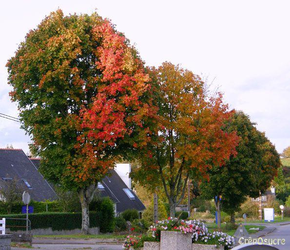 La saison des couleurs les plus chaudes, passant de l'ocre au marron et de l'or au rouge.