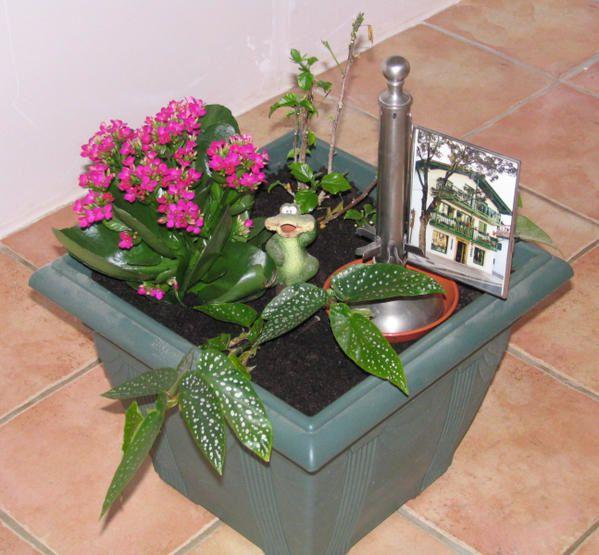 Voici mes photos préférées des fleurs du jardin et d'intérieur - j'en rajouterai au fur et à mesure ...