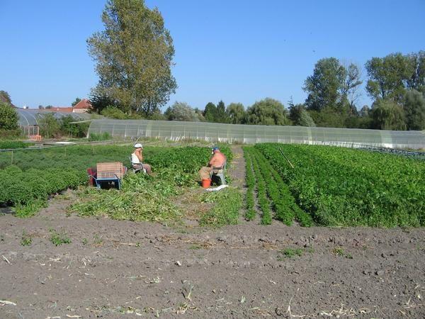 """<p>La Ferme du Marais -&nbsp&#x3B;sortie du&nbsp&#x3B;21 septembre 2006</p><p>Ferme p&eacute&#x3B;dagogique de Warlaing dans le nord.</p><p><a href=""""http://www.lafermedumarais.fr.st"""">http://www.lafermedumarais.fr.st</a></p><p>&nbsp&#x3B;</p>"""