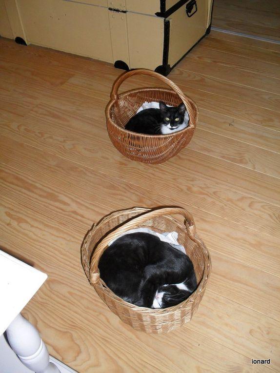 Album - les-chats-de-la-Grande-ourse