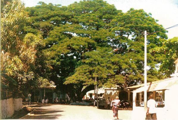<p><strong>Vous voulez decouvrir OUANI, cette ville ancienne et historique située au Nord de l'île d'Anjouan ?</strong></p><p><strong>Eh bien. Nous vous proposons les photos ci-dessous. Nous vous recommandons aussi le site de l'AOFFRAC : www. aoffrac.com</strong></p><p><strong>Il suffit de cliquer sur chaque photo pour l'agrandir et pouvoir lire, le cas echéant, les commentaires</strong></p><p><strong></strong></p><p></p>