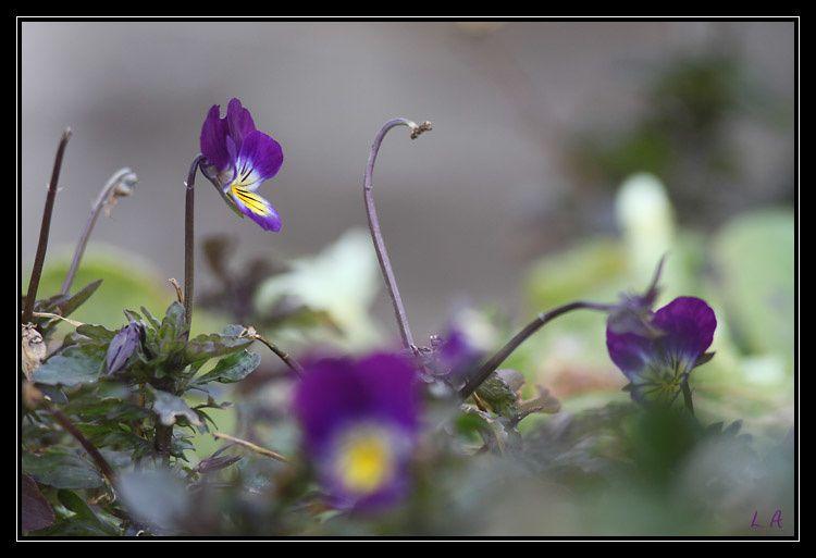 Album - faune-flore