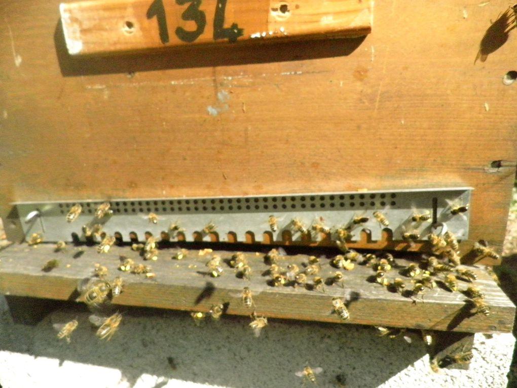 nos ruchers miel de Bourgogne