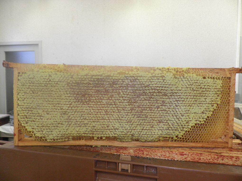 nos travaux aux ruchers en 2012